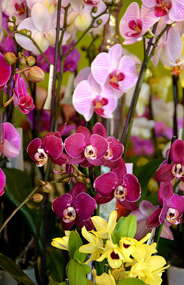 fleuriste richard marie